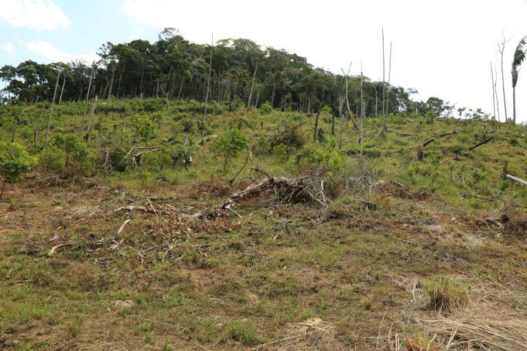 Habitantes de la zona y autoridades aseguran que grupos ilegales les pagan a personas para que talen en el Parque Tinigua y luego habiten en las tierras praderizadas. Foto: Cormacarena.
