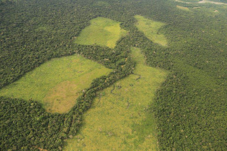 Grandes extensiones de tierra deforestada son luego usadas para sembrar cultivos ilícitos. Foto: Cormacarena.