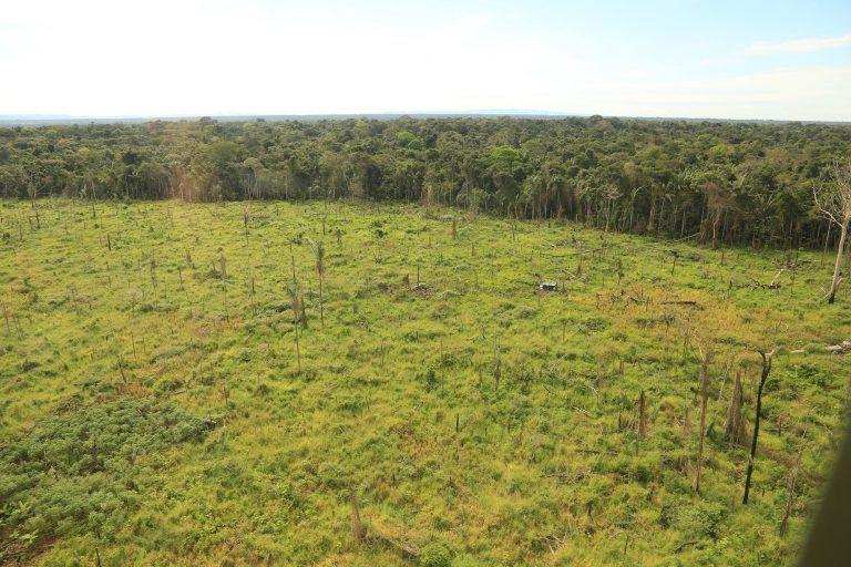 Así lucen enormes terrenos dentro del Parque Nacional Tinigua en el departamento del Meta. Foto: Cormacarena.