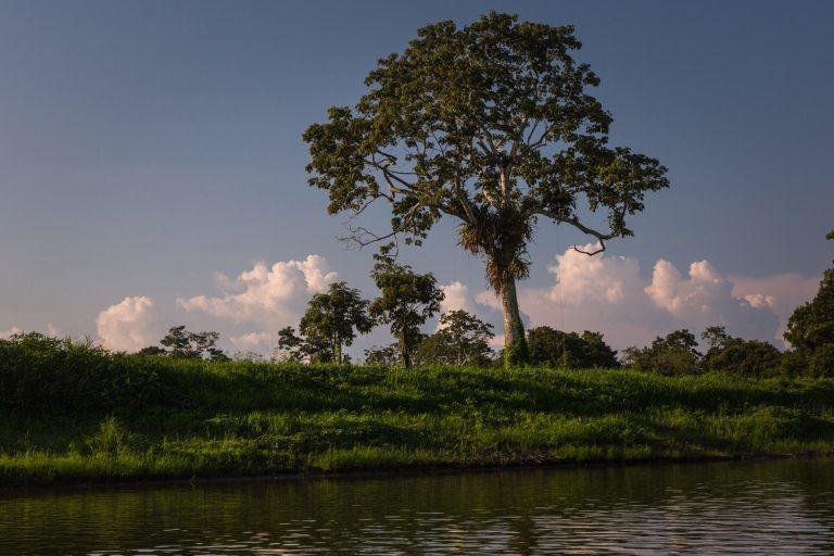 La Reserva Nacional Pacaya Samiria es una de las zonas que contiene mayor cantidad de humedales en Loreto. Foto: Diego Perez/WCS.