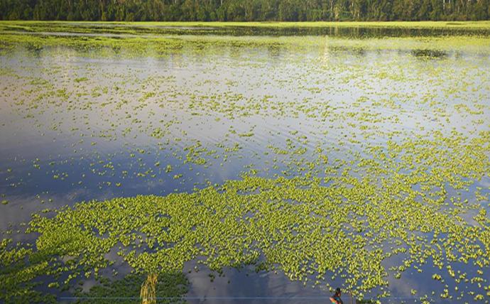 El gobierno regional de Loreto está elaborando una estrategia para conservar los humedales de la región. Foto: Gobierno Regional de Loreto.