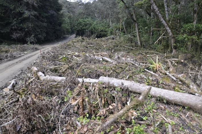 Áreas donde se están talando los árboles. Foto: Miriam Jemio.