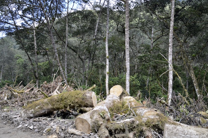 Una de las áreas dentro del parque donde talaron árboles. Foto: Miriam Jemio.