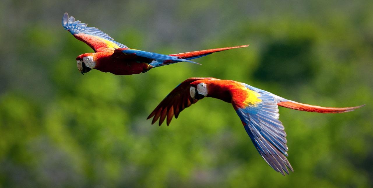 Estas son las ocho historias que más inspiran a seguir conservando los ecosistemas y el medioambiente de Latinoamérica. Foto: WCS