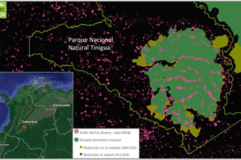 Un conjunto de datos producido por el laboratorio Global Land Analysis and Discovery (GLAD) identifica las áreas de pérdida de cobertura boscosa. Los paisajes forestales intactos son áreas de bosque primario lo suficientemente grandes como para conservar su biodiversidad nativa. Datos: GLAD/UMD y Greenpeace/WRI/Transparent World consultado en Global Forest Watch.