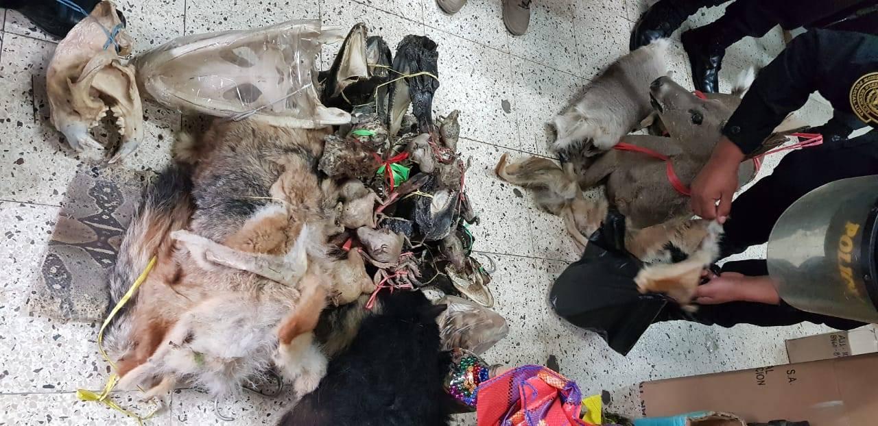 Pieles y partes de animales fueron encontrados en operativo policial que se realizó el 13 de julio. Foto: Foto: Dirección del Medio Ambiente de la Policía Nacional.