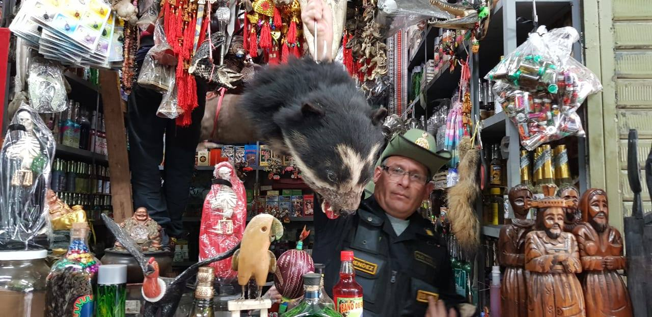 Una cabeza de oso andino de anteojos y partes de diferentes especies encontró la Policia en un megaoperativo realizado en Lima. Foto: Dirección del Medio Ambiente de la Policía Nacional.