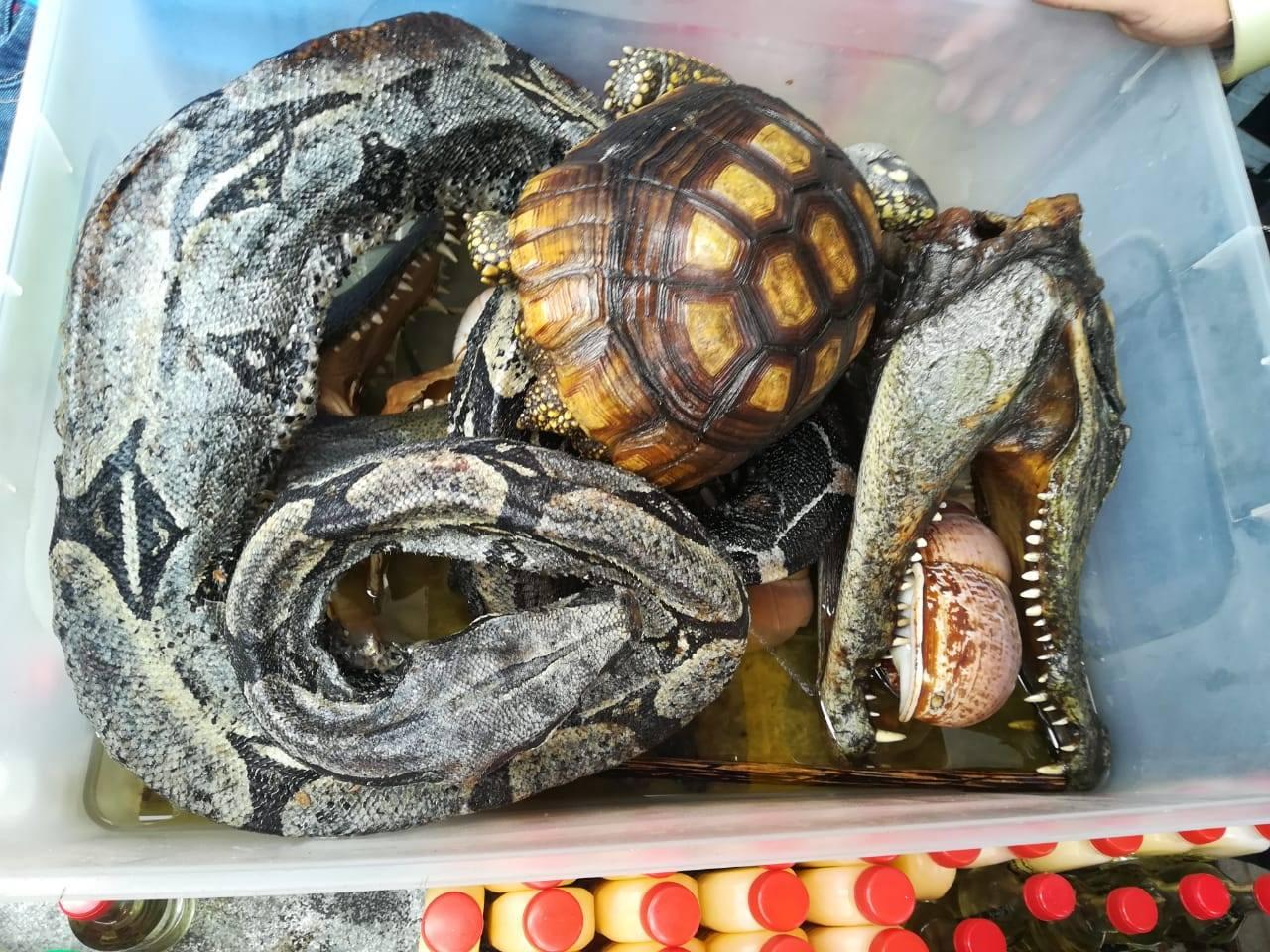 Culebras, caimanes y tortugas aparecen entre los animales incautados en operativo a galería de venta de fauna silvestre. Foto: Dirección del Medio Ambiente de la Policía Nacional.