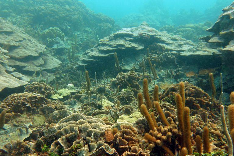 A pesar de la contaminación de la Bahía de Cartagena, los corales heroícos han resistido a la contaminación y sedimentación. Foto: Valeria Pizarro.