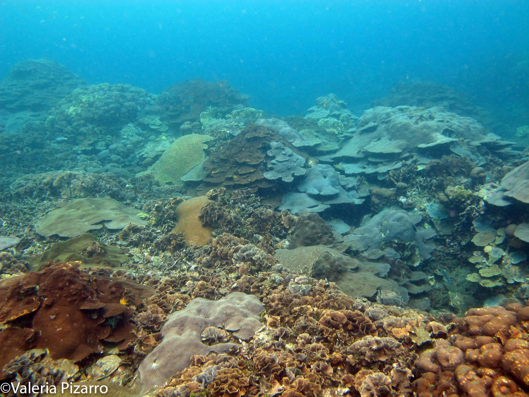 Varadero es como un jardín escondido con más de 62 especies de corales. Foto: Valeria Pizarro.