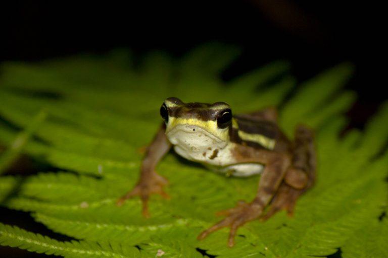 Los anfibios son unos de los animales más susceptibles al cambio climático. Foto: Diego Gómez Hoyos.