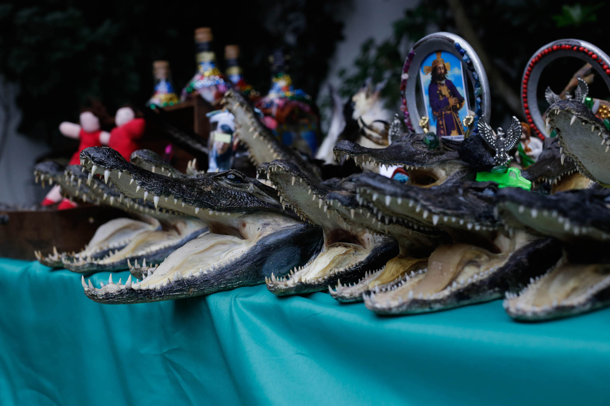 Cabezas de animales silvestre y artesanía hechas con partes de éstos fueron decomisados. Foto: Serfor.