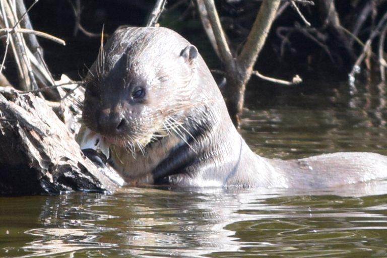 Los investigadores aseguran que el mercurio afecta a peces y otras especies de los ríos. Foto: Archivo Mongabay Latam.