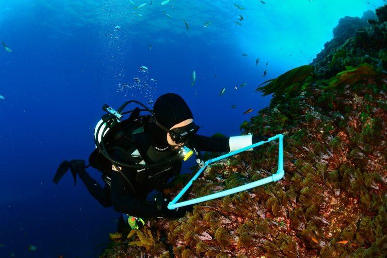 Carlos Gaymer ha sido el artífice de la creación de cuatro áreas reservadas marinas en Chile. Foto: Esmoi.
