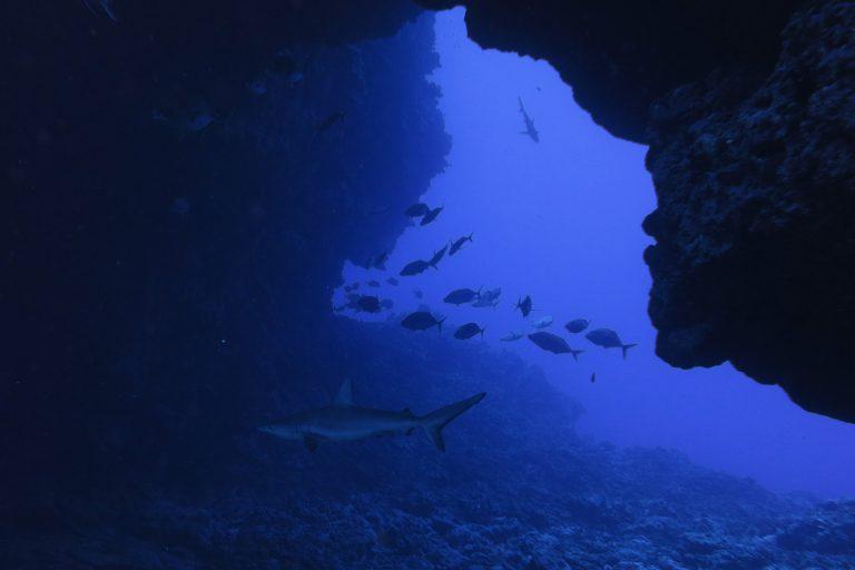 El Parque marino Motu Motiro Hiva fue creado en el años 2010. Foto: Esmoi.