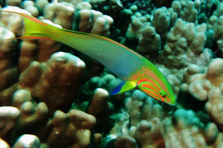 Los mares prístinos del Pacífico albergan una gran biodiversidad. Foto: Esmoi.