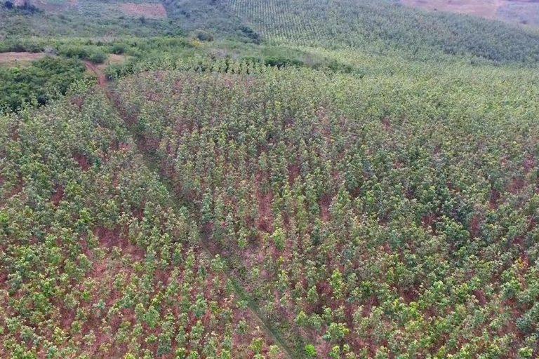 Muchas tierras han sido utilizadas para grandes cultivos- Foto: Corporación Desarrollo Solidario -CDS.