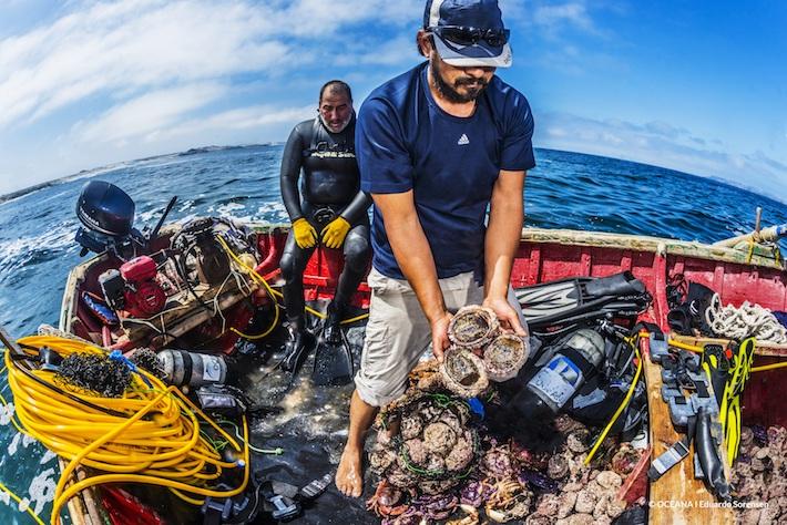 Pescadores artesanales recogiendo la producción de locos (especie de marisco) de una de las pesquerías cercanas al proyecto Dominga. Foto: © Oceana - Eduardo Sorensen.