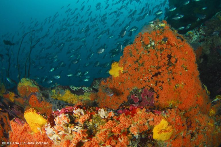 La propuesta es instalar el proyecto Dominga en un área de alta biodiversidad. Foto: Oceana / Eduardo Sorensen.
