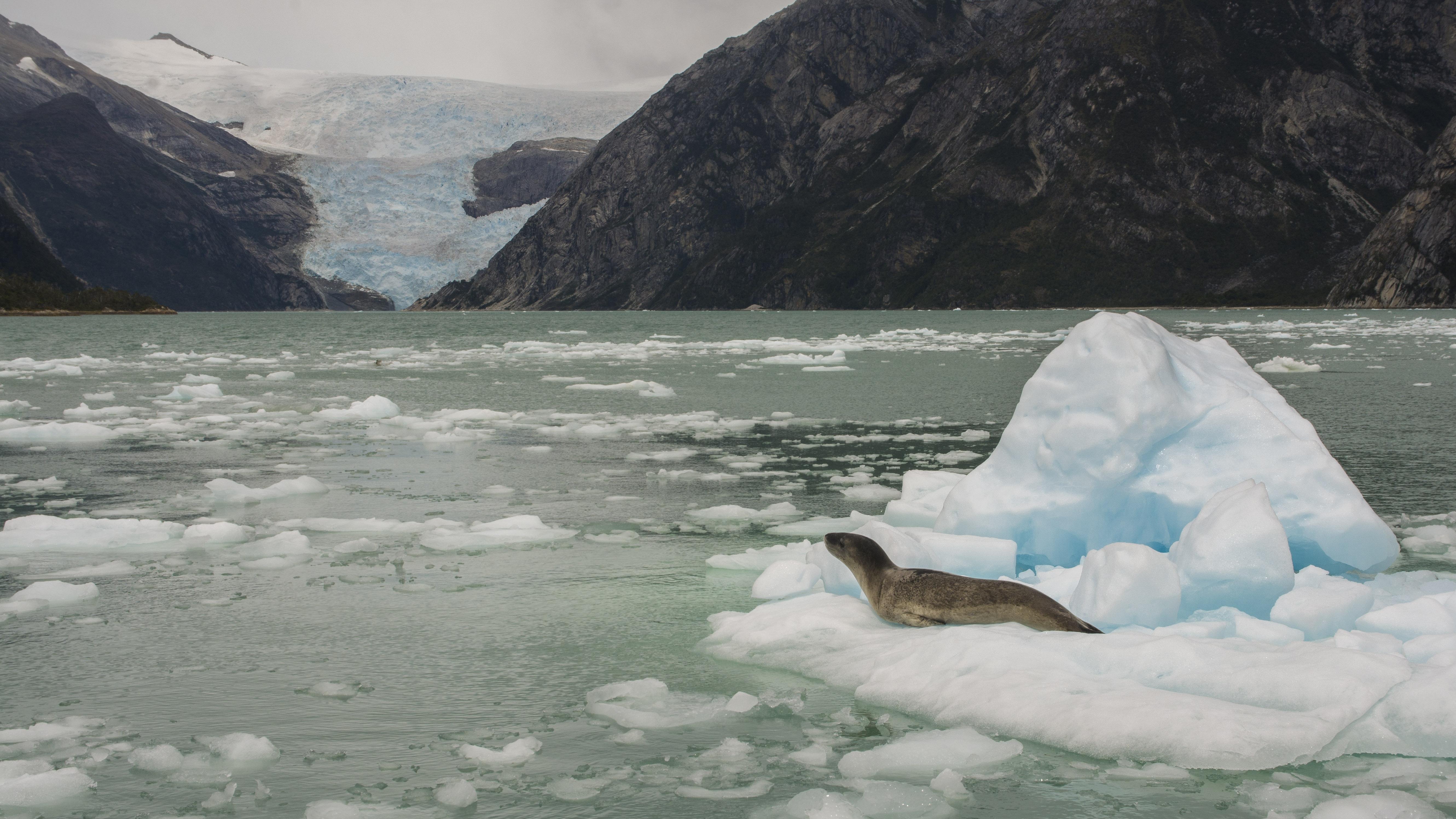 Espectaculares paisajes marinos y glaciares se observan en el área marina Seno Almirantazgo. Foto: Jorge Vidal / WCS.