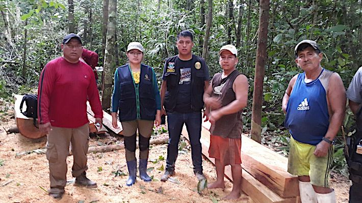 La fiscal Coaquira, un policía ecológico y los dos taladores ilegales capturados (lubicados en el lado derecho de la imagen) en plena acción dentro de la concesión Tres Chimbadas, manejada por la etnia Ese'eja de la comunidad de Infierno. Crédito: SPDA.