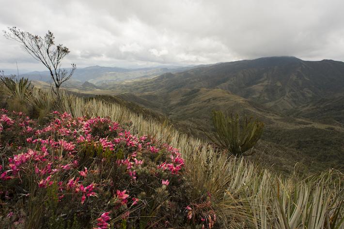 Se han identificado 16 ecosistemas dentro del Corredor de Conectividad Sangay-Podocarpus. Foto: NCI - Fabián Rodas.