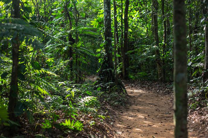 Enormes árboles, varios de ellos con una edad de cientos de años, son impactados por la actividad maderera fuera de la ley. El bosque resiste pero la amenaza continúa. Foto: Diego Pérez/SPDA.