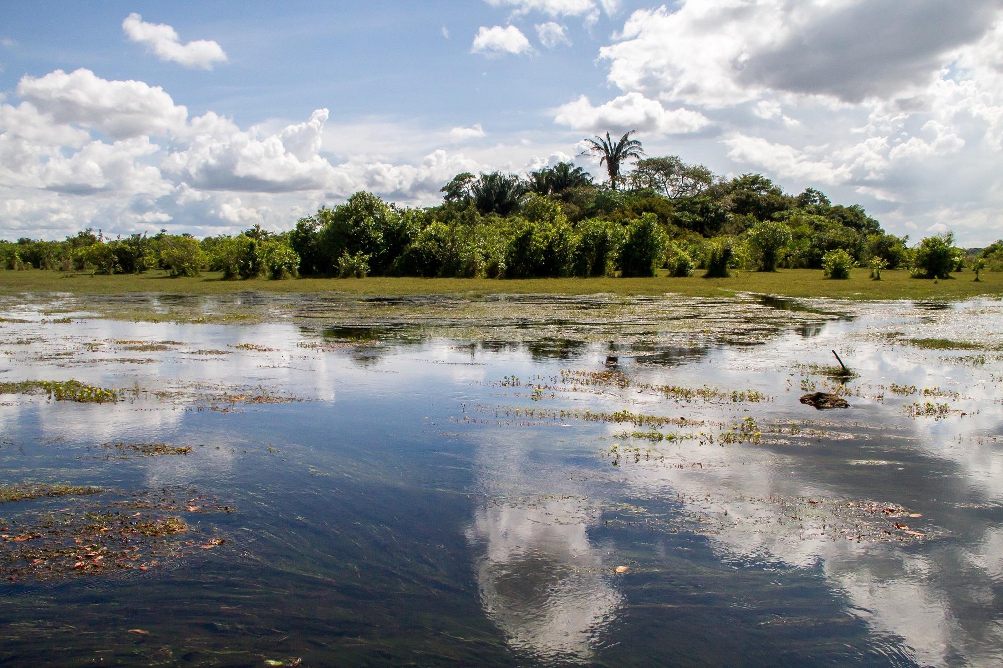 Panorámica de un paisaje de sabanas inundables típicas de Cinaruco. Foto: Rodrigo Durán Bahamón.
