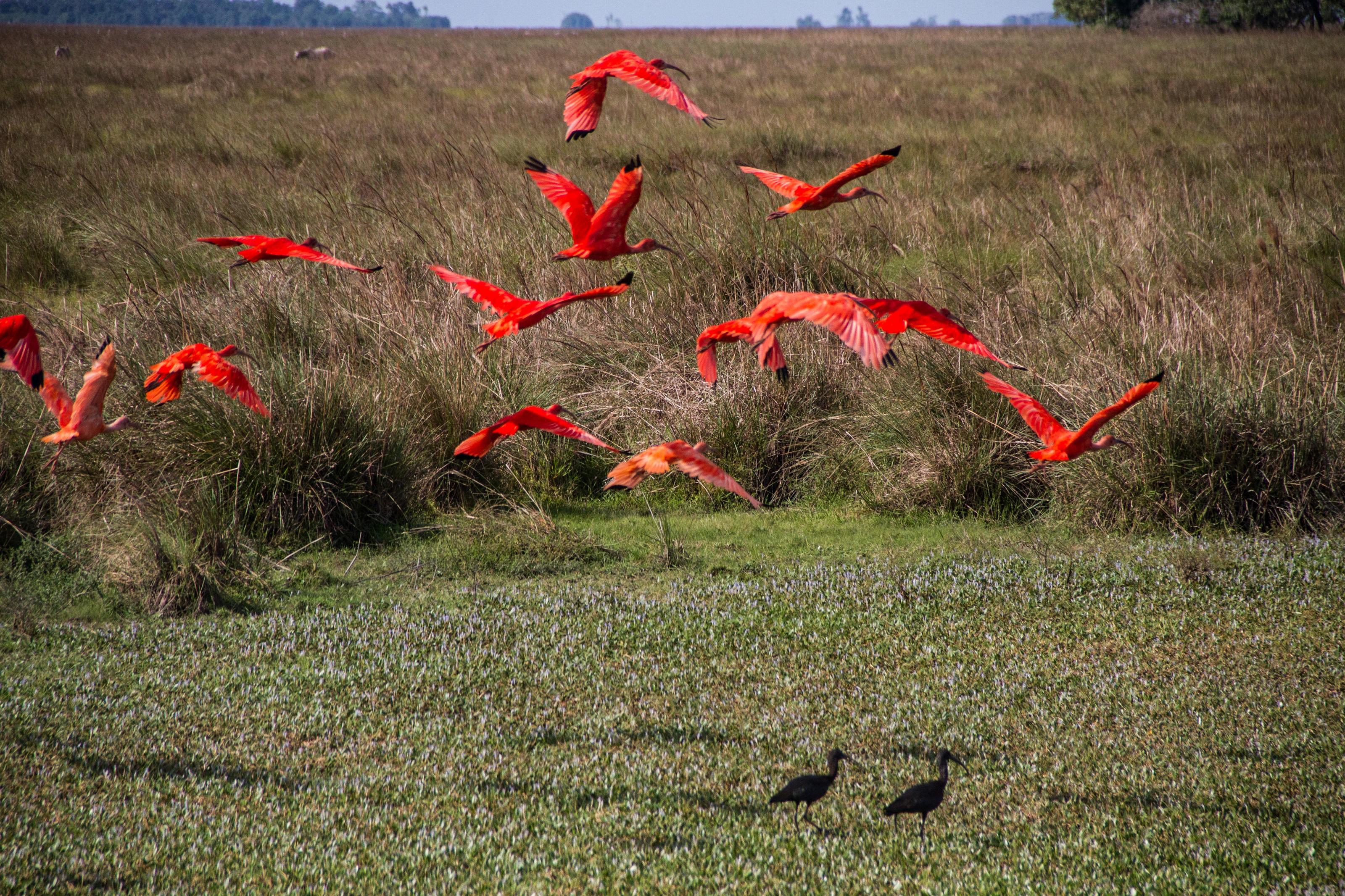 Los suelos, al estar inundados gran parte el año, hacen que lleguen una gran cantidad de aves migratorias. Foto: Rodrigo Durán Bahamón.