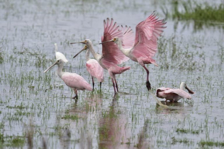En Cinaruco pueden encontrarse 178 especies de aves. Foto: Parques Nacionales Naturales de Colombia.