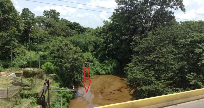 Petróleo en los recovecos del Guarapiche, en derrame de julio de 2018. Foto: Ronny Rodríguez Rosas.