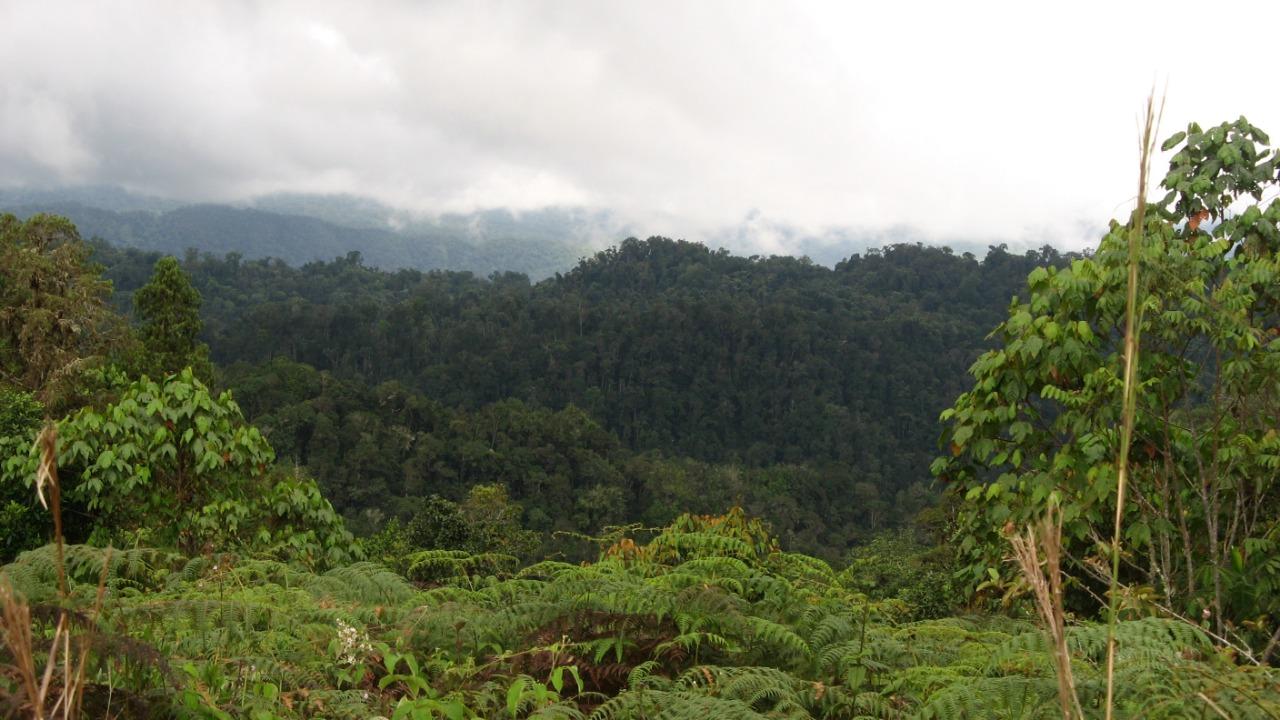 Bosque de Galilea. La autoridad ambiental del Tolima quiere proteger cerca de 33 000 hectáreas. Foto: Cortolima.