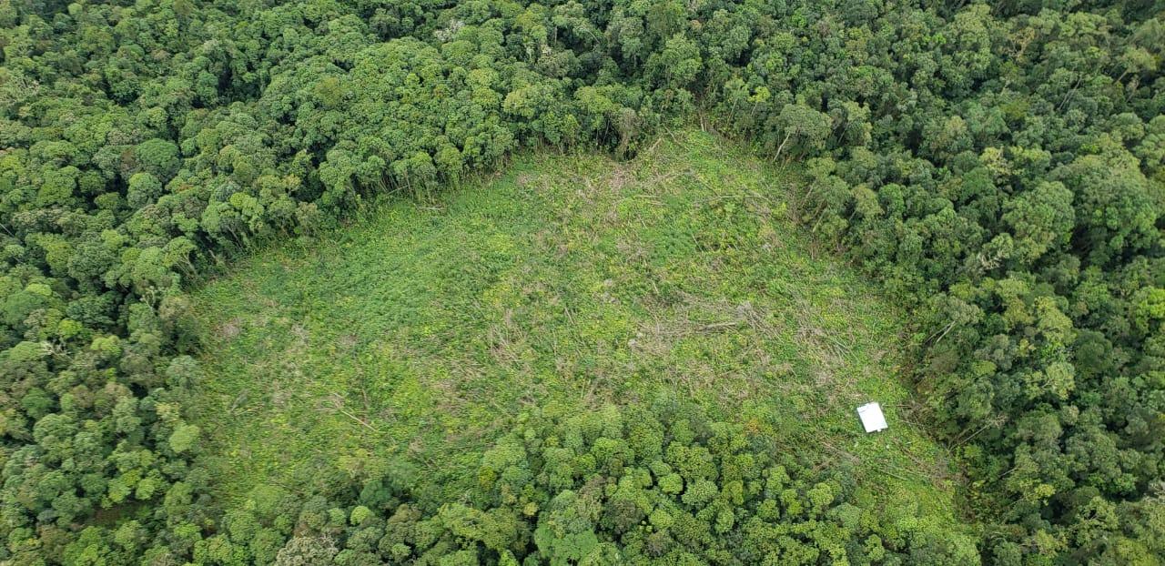 Deforestación en el bosque de Galilea, en el departamento de Tolima. Foto: Cortolima.