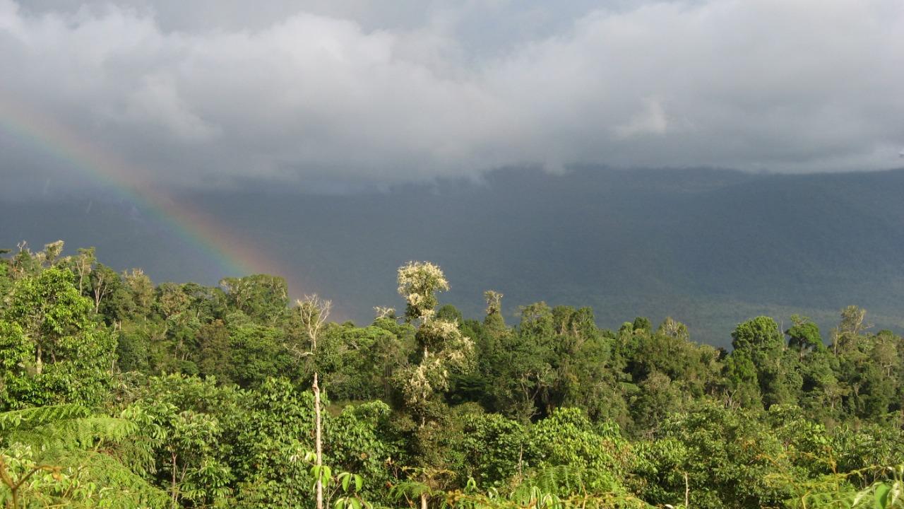 Este bosque inmenso, que según las investigaciones hace 700 años no se toca, ahora está en riesgo. Foto: Cortolima.