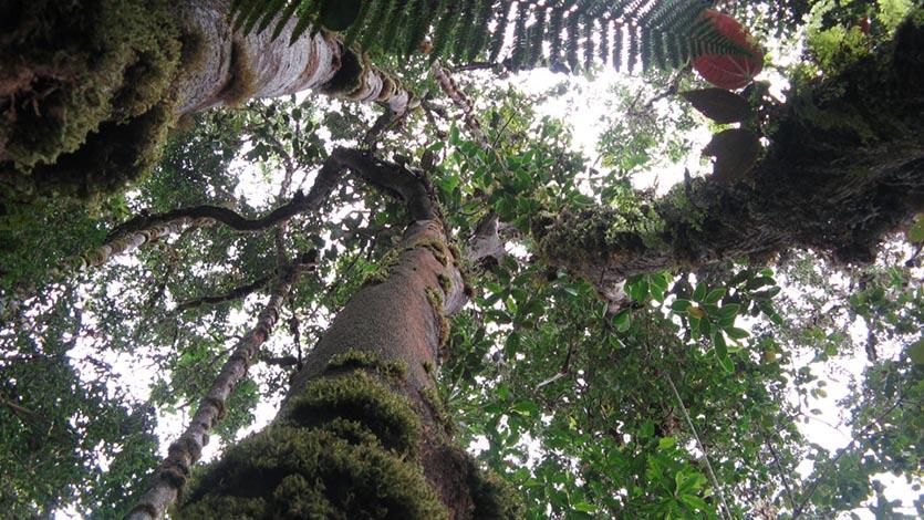Según Cortolima, Galilea tiene un relicto de bosque insuperable en el país por su estado de conservación. Foto: Cortolima.