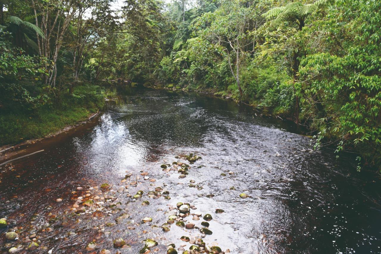 El río Negro nace en el Bosque de Galilea y abastece la represa de Prado. Foto: Cortolima.