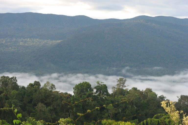 Siempre cubierto de nubes, Galilea es uno de los pocos relictos de bosque nuboso que quedan en Colombia. Foto: Cortolima.
