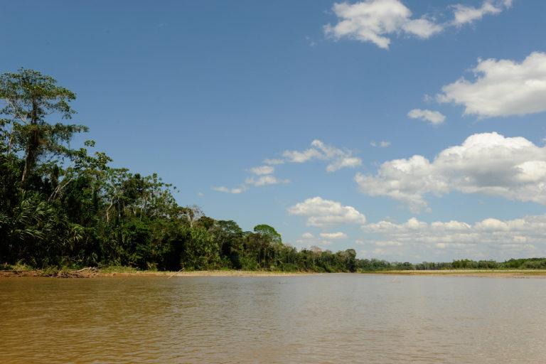 Los chipi chipis se desplazan por casi 370 kilómetros en su migración por el río Beni. Foto: Julie Larsen Maher / WCS.