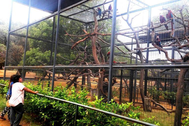 El zoológico de Zulia en el año 2015. Foto: Parque Metropolitano del Estado de Zulia.