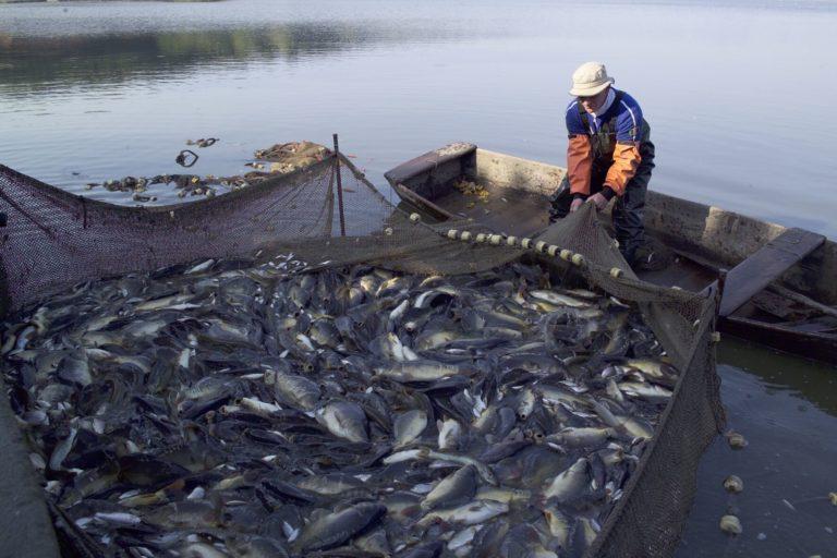 mar peruano Más de 6 millones de toneladas de anchoveta se desembarcaron en el 2018. Foto: Agencia Andina.