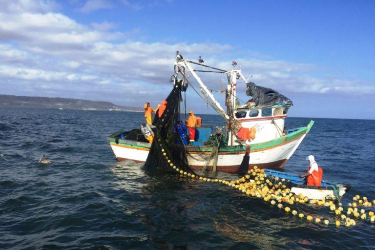 Expertos coinciden en que el mar peruano, uno de los más biodiversos del mundo, no recibe suficiente atención. Foto: Agencia Andina.