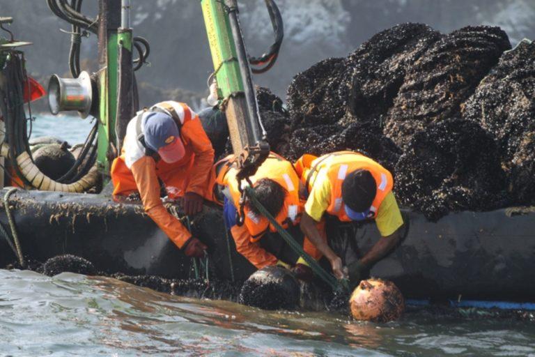La extracción de conchas de abanico es el principal producto de acuicultura en el mar peruano. Foto: Agencia Andina.