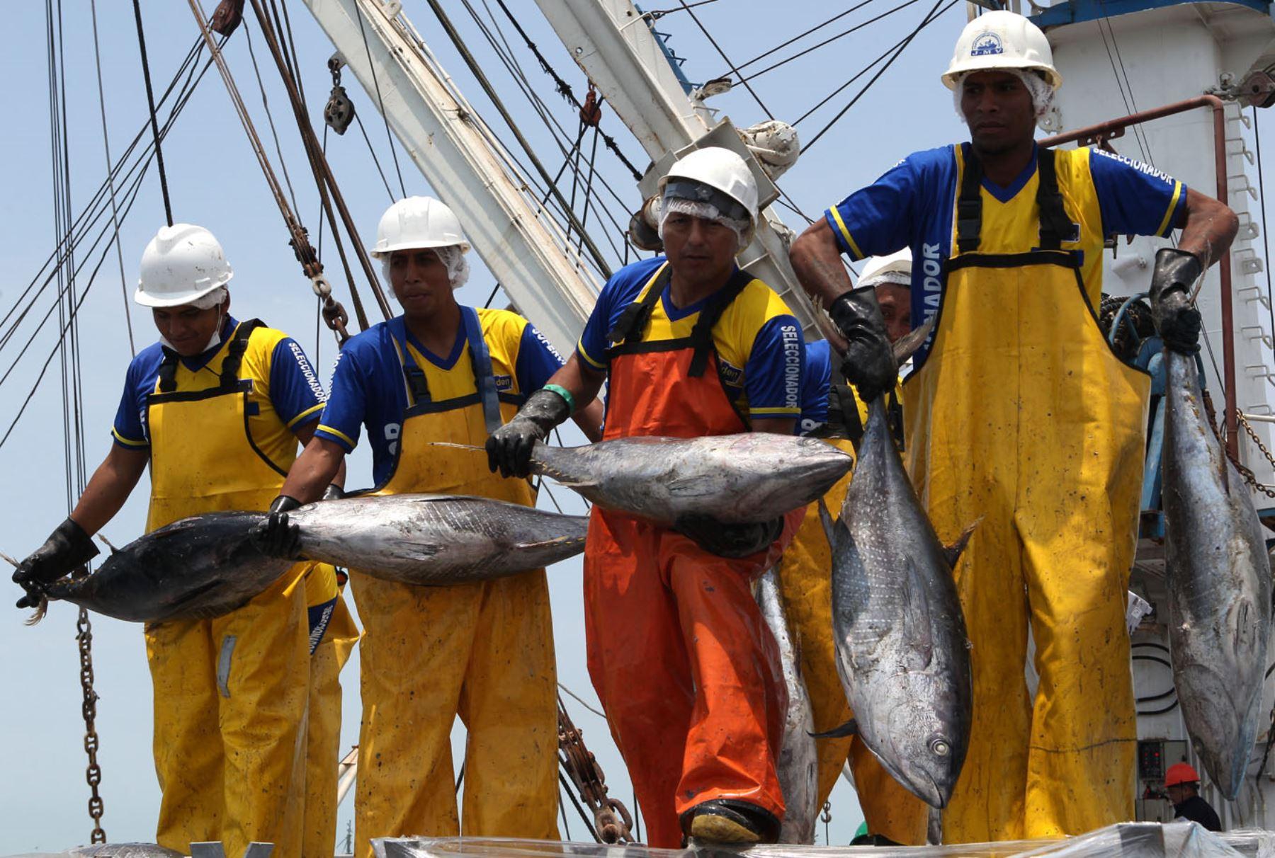 El atún, una de las especies marinas que más se pescan en el mar peruano. Foto: Agencia Andina.
