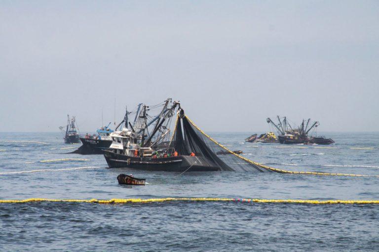 La pesca industrial se destina principalmente a la elaboración de harina de pescado. Foto: Agencia Andina.