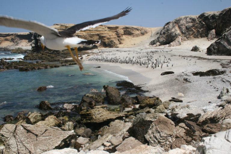 El mar peruano es uno de los más biodiversos del planeta. Foto: Oceana.