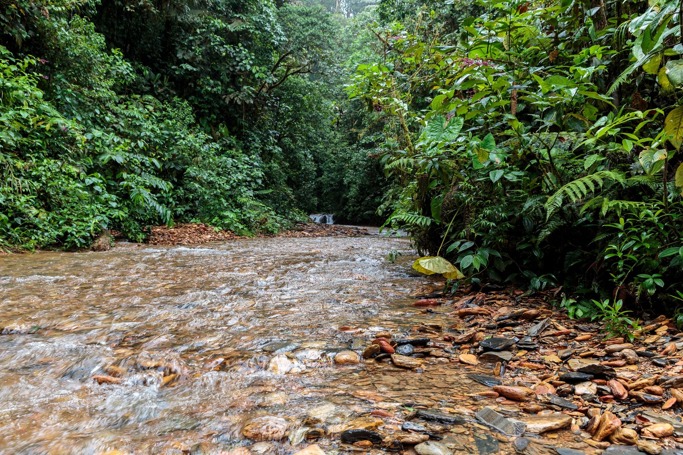 La nueva Reserva de la Biósfera es un gran reservorio de agua. En ella se encuentran cinco cuencas hídricas que aportan agua a poblaciones dentro y fuera de la reserva. Foto: Sebastián Crespo - CONDESAN.