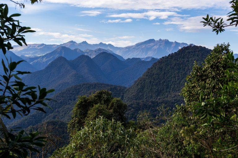 En las ocho áreas núcleo de la Reserva de la Biósfera se conservan bosques prístinos y se estima que habitan 700 especies de aves, 140 especies de anfibios y 40 de reptiles. Foto: Sebastián Crespo - CONDESAN.