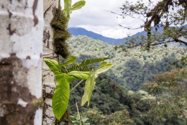 En la Reserva de la Biósfera del Chocó Andino se encuentran por lo menos 3200 especies de plantas. Foto: Sebastián Crespo - CONDESAN.