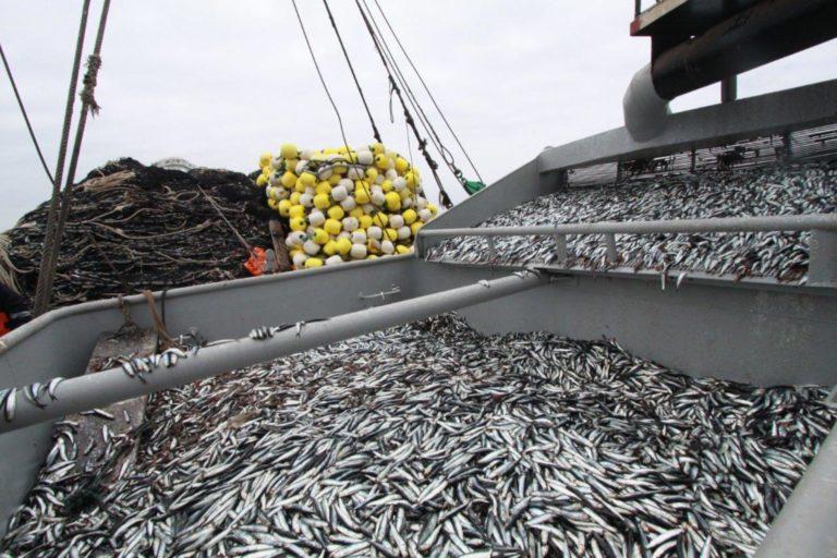 El mar peruano tiene más de mil especies de peces, además de moluscos, crustáceos y algas. Foto: Agencia Andina