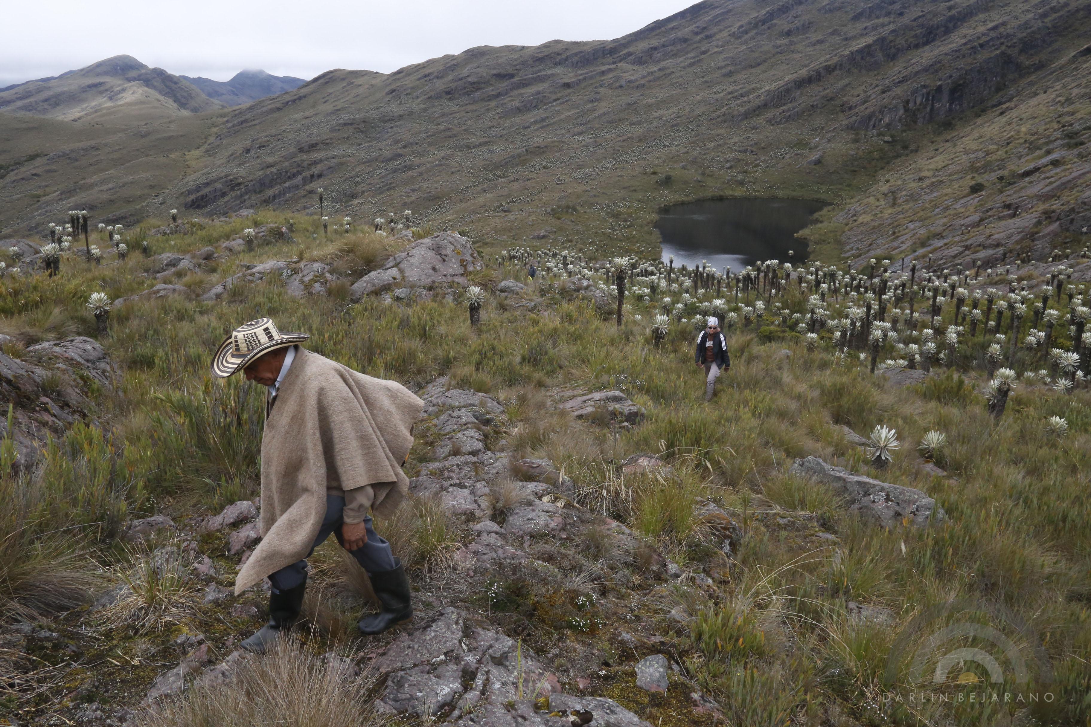 El páramo de Pisba alcanza una altura de 3800 metros sobre el nivel del mar. Foto: Jarlin Bejarano.